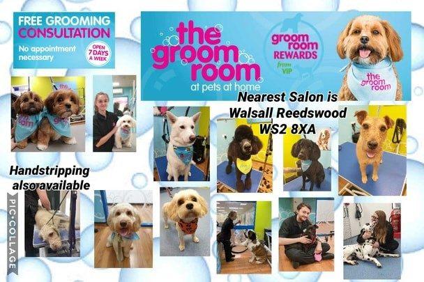 grooming pets