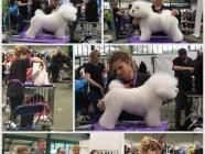 Wayland Wags Dog Grooming