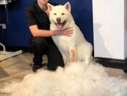 Beau Chien Pet Boutique