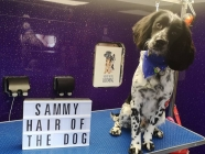 Hair Of The Dog Grooming