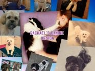 Rachael's Canine Design