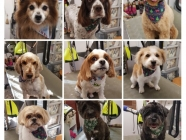 Handsome Hounds and Pretty Pooches Dog Grooming Studio