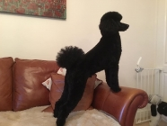 West Bridgford Dog Grooming